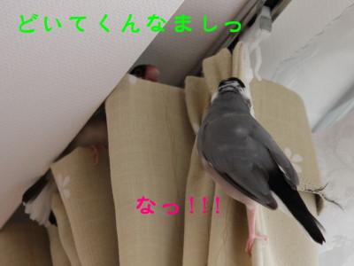 b0158061_21245517.jpg