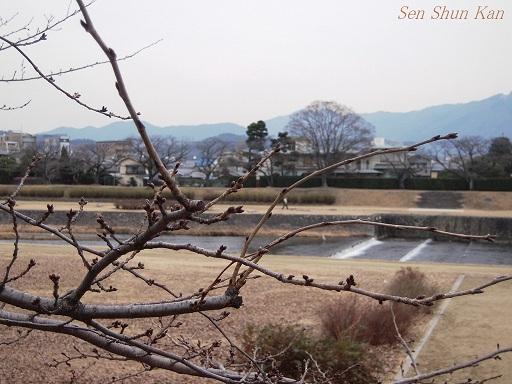 賀茂川 2013年2月1日_a0164068_22375169.jpg