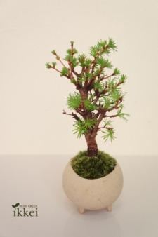 moss green ikkei さくら盆栽展のご案内_d0263815_145231.jpg