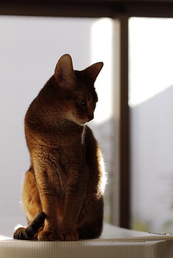 [猫的]獣医さんへ_e0090124_2253532.jpg