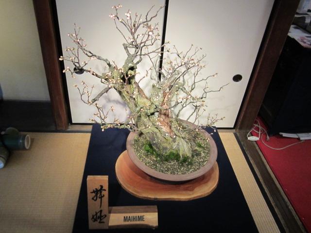 長浜盆梅展2_c0088525_2072849.jpg