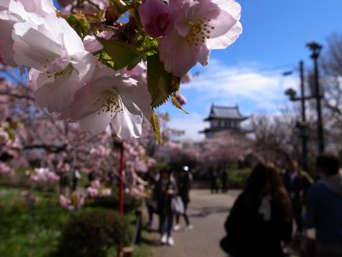 桜_b0108779_22392153.jpg
