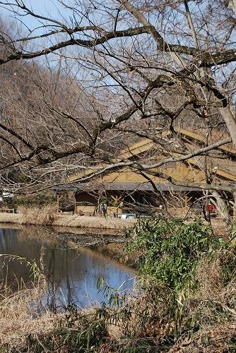 春を探しに…緑の森博物館へ_c0124100_21532614.jpg