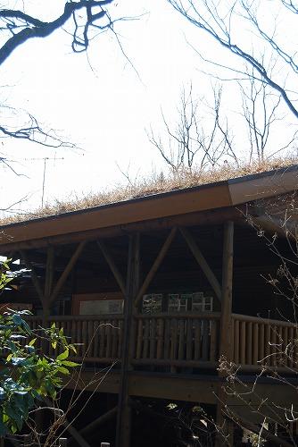 春を探しに…緑の森博物館へ_c0124100_21533556.jpg