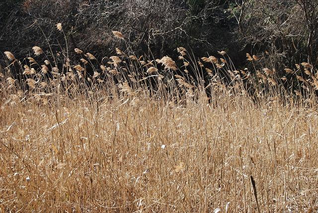 春を探しに…緑の森博物館へ_c0124100_21594938.jpg