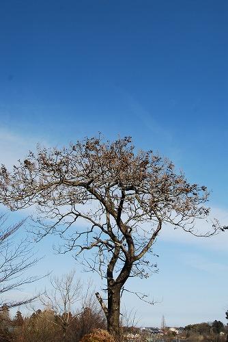 春を探しに…緑の森博物館へ_c0124100_2201485.jpg