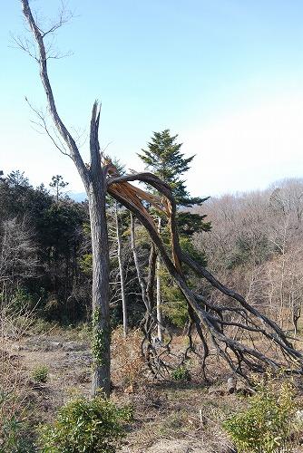 春を探しに…緑の森博物館へ_c0124100_220232.jpg