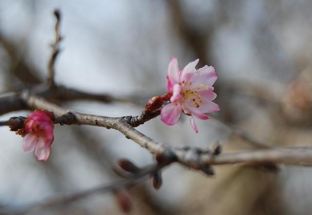 春を探しに…緑の森博物館へ_c0124100_2211973.jpg