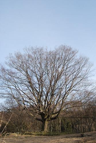 春を探しに…緑の森博物館へ_c0124100_2262413.jpg