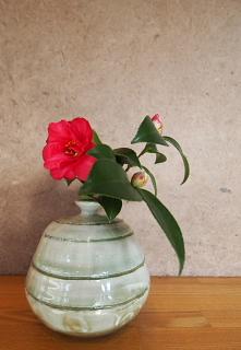 山茶花_c0039501_17241626.jpg