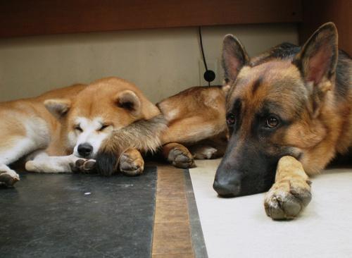 犬や猫で人生が変わる_d0290407_11295564.jpg