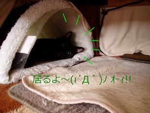 b0200310_1616583.jpg