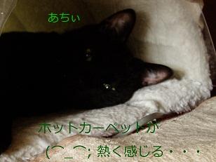 b0200310_1618146.jpg