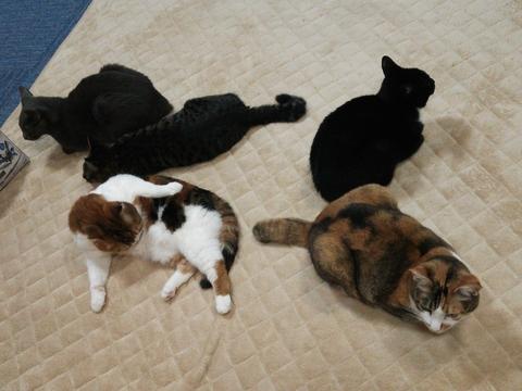 猫カフェ_e0237625_234485.jpg