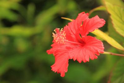 沖縄の旅 2_d0055236_14131876.jpg