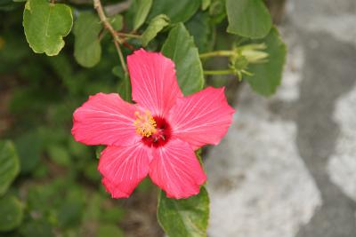 沖縄の旅 2_d0055236_1414930.jpg