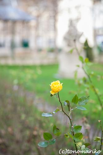 パリの春の兆し_c0024345_125439.jpg
