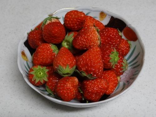 お苺さんでございます♪_e0240147_23223090.jpg