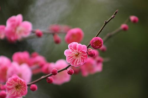 俳句 季語 立春