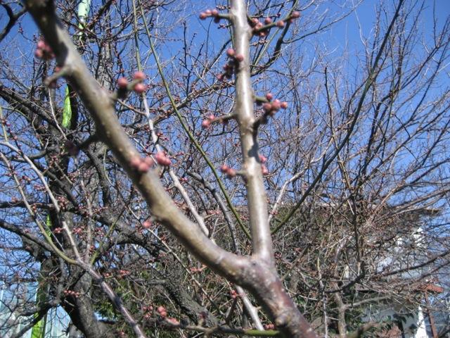 春かも_c0201876_10324119.jpg