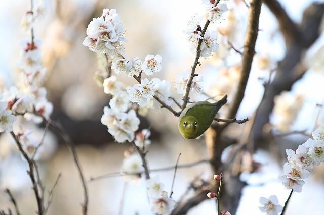 春一番_e0145693_21353891.jpg
