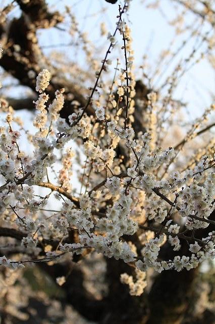 春一番_e0145693_21405957.jpg