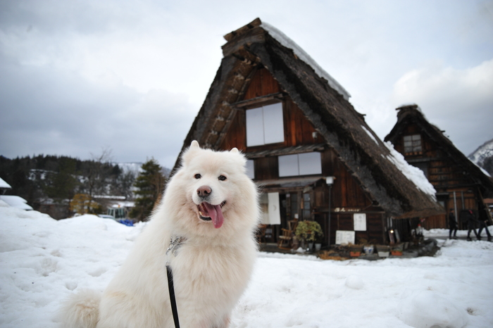 雪の岐阜へ part1_a0049296_18573859.jpg