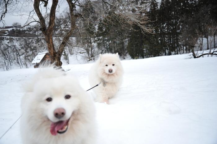 雪の岐阜へ part1_a0049296_185792.jpg
