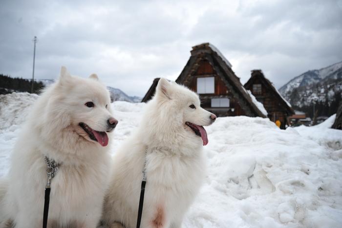 雪の岐阜へ part1_a0049296_18581213.jpg