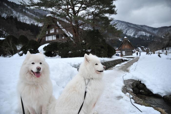 雪の岐阜へ part1_a0049296_18582892.jpg