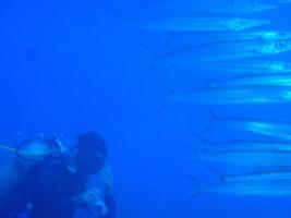 海の中からハロー^^_a0043520_22434726.jpg