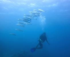 海の中からハロー^^_a0043520_2245267.jpg