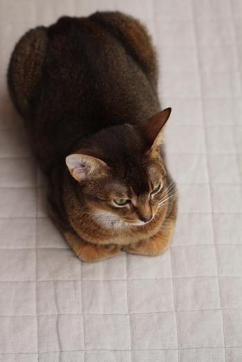 [猫的]低温火傷_e0090124_0125193.jpg