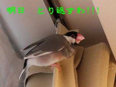 b0158061_21442872.jpg