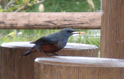 野鳥とおべんとう_a0247891_21201283.jpg