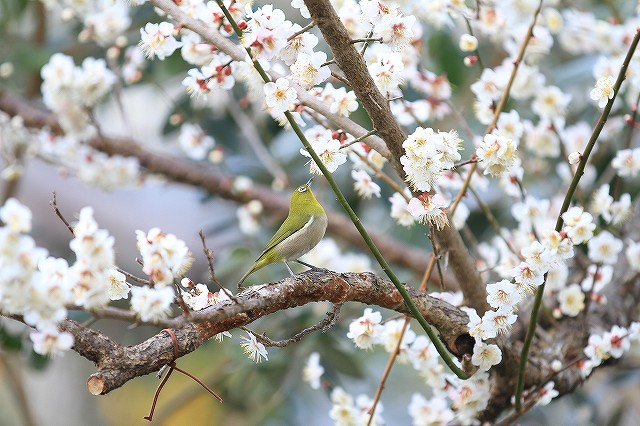 春一番_e0145693_2256964.jpg