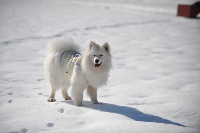 雪の岐阜へ part2_a0049296_6272651.jpg