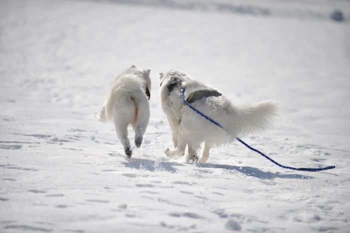 雪の岐阜へ part2_a0049296_6295368.jpg