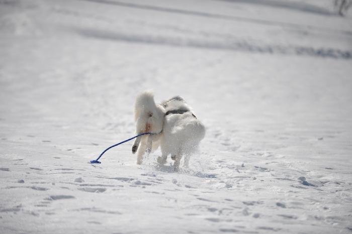 雪の岐阜へ part2_a0049296_630715.jpg