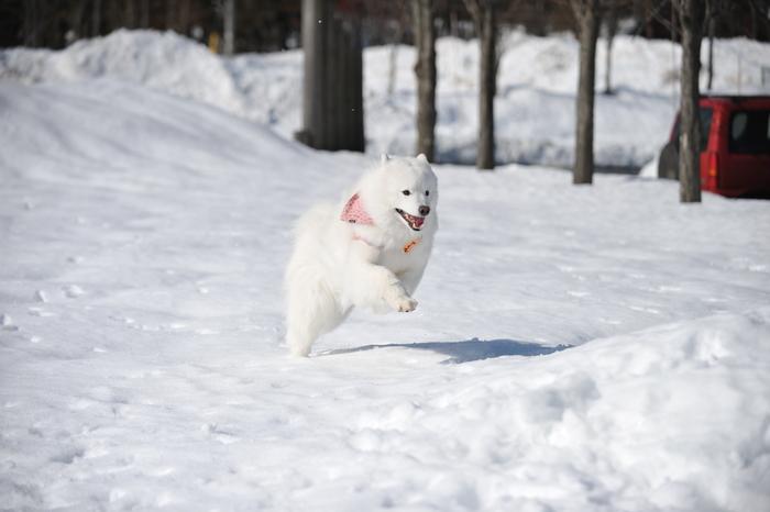 雪の岐阜へ part2_a0049296_6312085.jpg