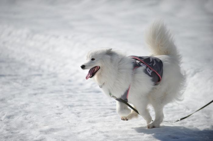 雪の岐阜へ part2_a0049296_6321029.jpg