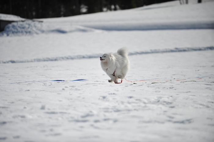 雪の岐阜へ part2_a0049296_6323715.jpg