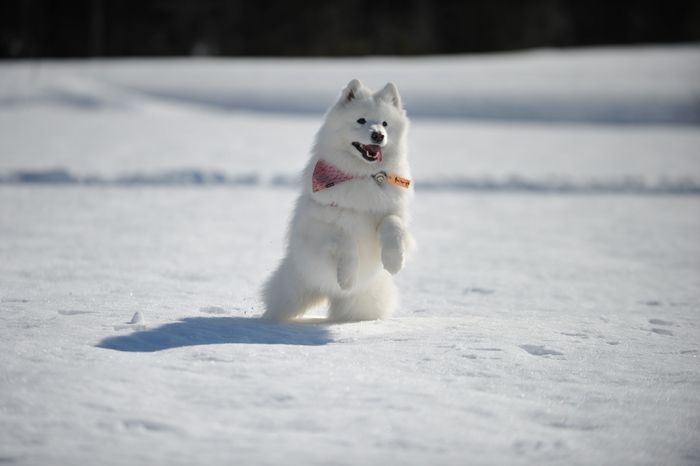 雪の岐阜へ part2_a0049296_6342786.jpg