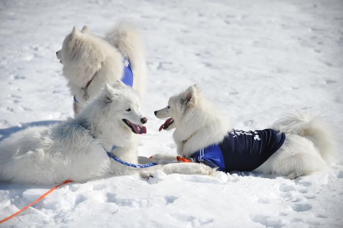 雪の岐阜へ part2_a0049296_635877.jpg