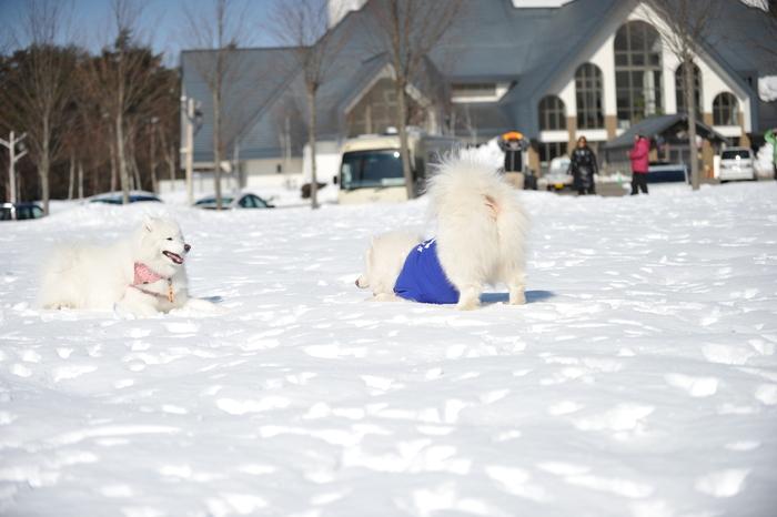 雪の岐阜へ part2_a0049296_6362847.jpg