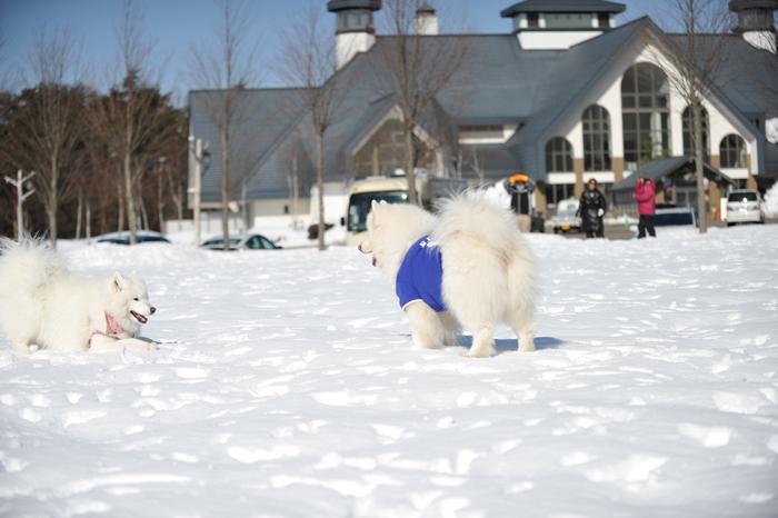 雪の岐阜へ part2_a0049296_636943.jpg