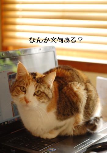 猫の選ぶ、暖かい場所。_b0253205_339250.jpg