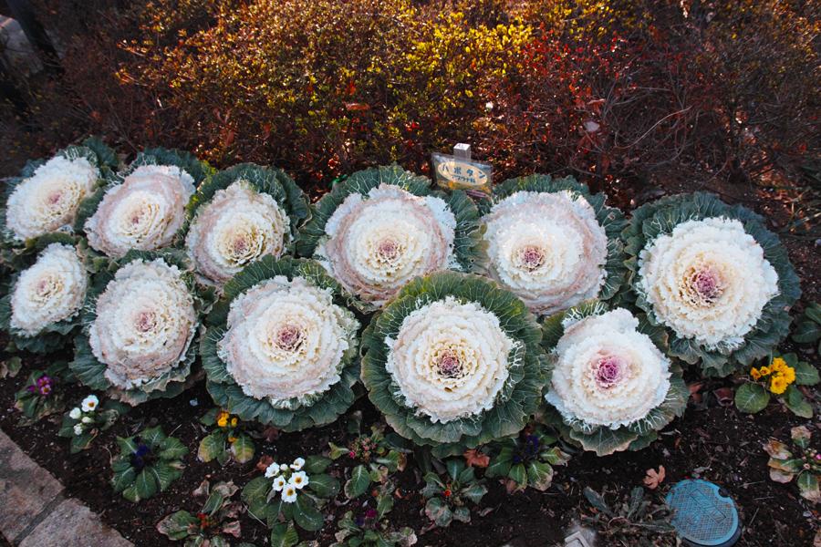 2月2日、初春のゆいの花公園_c0223825_0311449.jpg