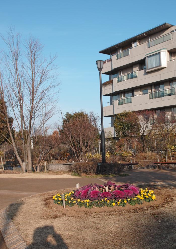 2月2日、初春のゆいの花公園_c0223825_0324549.jpg
