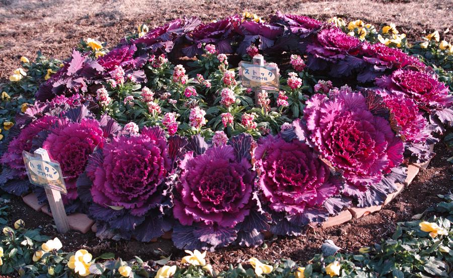 2月2日、初春のゆいの花公園_c0223825_0343651.jpg